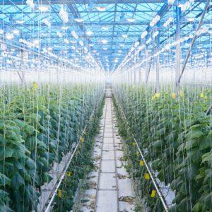 Modern Vegetable Plantation in Greenhouse
